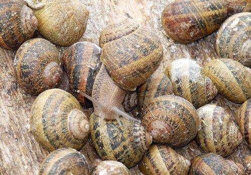 Les Escargots du Pays d'Othe